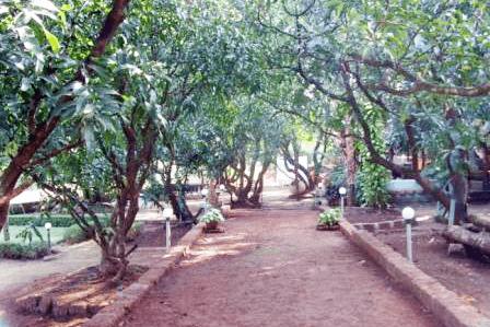 entrance-through-dense-green-mango-grove