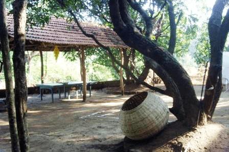 mango-grove